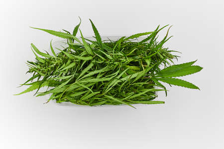 Lots of green leaves and cannabis herb marijuana in a plastic container isolated on white background 免版税图像