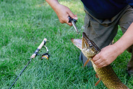 Pulling the hook out of the pike's mouth with a special clip and fishing tools. Fishing by spinning from the shore.