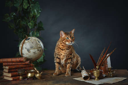 Desktop of the sorceress McGonagall at Hogwarts school. She turned into a cat. Antique items, books and manuscripts on a dark background. Space for your text