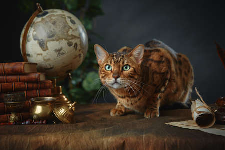 Bengal cat, vintage items, books and manuscripts on the table on a dark background.