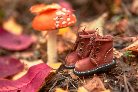 Autumn forest composition with a copy of stylish leather shoes