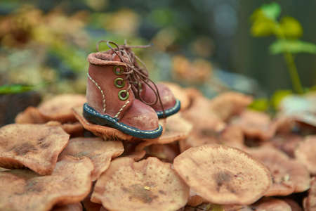 A pair of toy leather shoes stand in the autumn forest.
