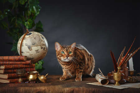 Bengal cat, vintage items, books and manuscripts on the table on a dark background. Space for your text.