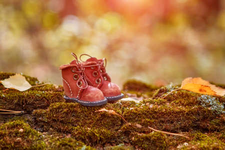 Autumn forest composition with a copy of stylish leather shoes.