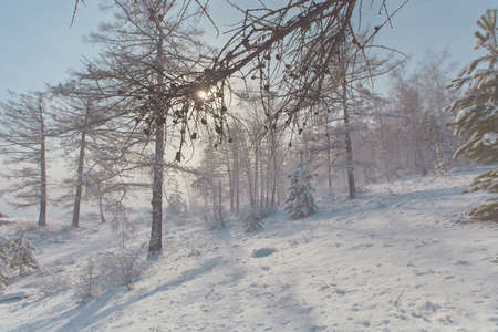 Sunlight breaks through the fog from a snowstorm. Winter fairy tale in pastel colors. 免版税图像