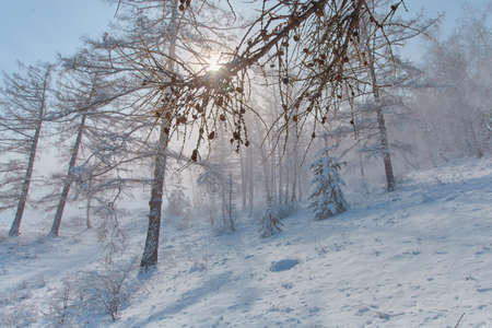 Snow storm in the forest mountain area in winter.