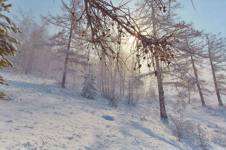 Sunlight breaks through the fog from a snowstorm. Winter fairy tale in pastel colors