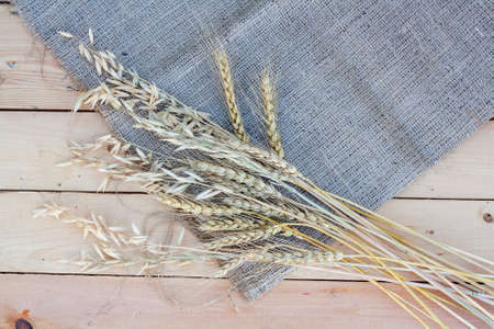 sheaf: Sheaf of wheat and oat on wooden background Stock Photo