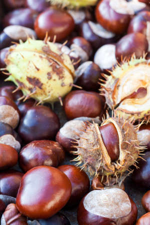 Rich brown autumn conkers from a horse chestnut tree as an abstract background texture Standard-Bild
