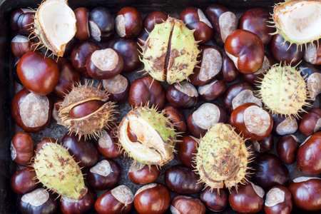 conkers: Rich brown autumn conkers from a horse chestnut tree as an abstract background texture Stock Photo