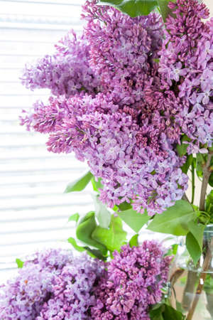 syringa: Branches of flowering purple lilac syringa in a glass jar on light table. Beautiful spring floral background.