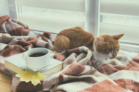 Cup of coffee, book with autumn yellow leaf and red-white cat surrounded wool blanket on windowsill Stock Photo - 65884275