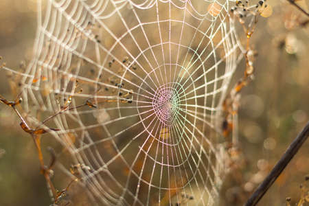 Close up view of the strings of a spiders web with bokeh. Gold spider web of lines that are crossed to a pattern with water drop. Circle drop on the line against the sun. Stock Photo