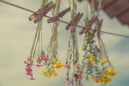 Different types of herbs dried in the shade on a rope against the blue sky. Shallow depth of field. Coloring and processing photo with soft focus in instagram style.