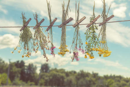 Different types of herbs dried in the shade on a rope against the blue sky. Shallow depth of field. Coloring and processing photo with soft focus