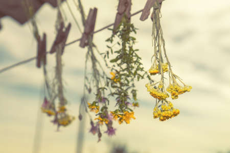Different types of herbs dried in the shade on a rope against the blue sky. Shallow depth of field.