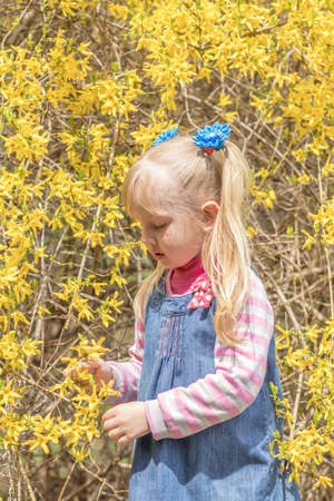 Cute little blonde girl with two ponytails near the bush with bright yellow flowers in the city park on a spring sunny day