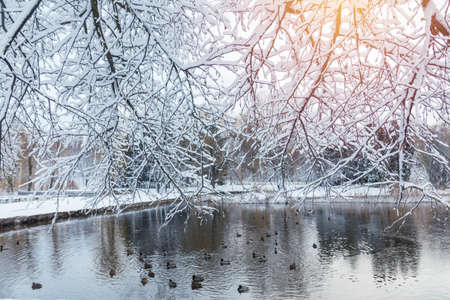 First snow in the city park with ducks on an icy pond and a bench covered with snow.  Sunny day in the winter city park. Stock Photo - 93065460