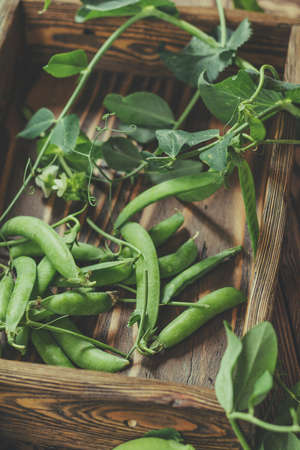 Pods of green peas and pea on a dark wooden surface Stock Photo - 93153659