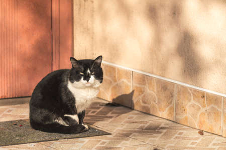Cut black-white cat sitting on the doorstep of the house. Sunny beautiful winter day. Close up, copy space. Stock Photo
