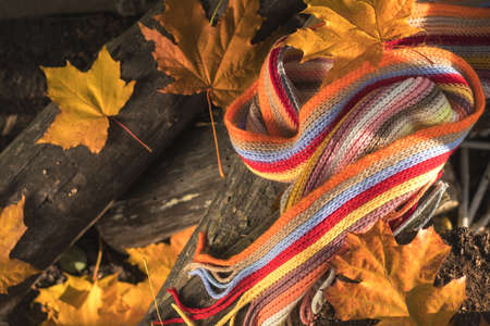 Multicolored scarf and yellow maple and oak leaves on the logs. Bright autumn background. Sunlight, copy space Stock Photo