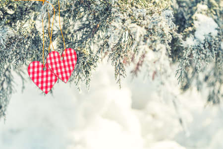 Beautiful valentine holiday background with two checkered hearts on thuja cypress tree branches covered with hoarfrost, white snow surface.