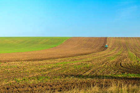 Winter wheat field with a tractor working on it in the fall under the clear blue sky. Sunny autumn day. Concept of natural agriculture.