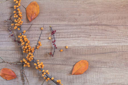 Autumn healthy concept. Branch of common sea buckthorn with berry and dogwood, dried autumn yellow leafs on light wooden background. Toned photo with copy space.