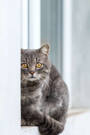Cute gray cat sitting on the windowsill of the house outdoor. Beautiful day, close up, copy space. Toned photo, close up, shallow depth of the field. Stock Photo - 100283672