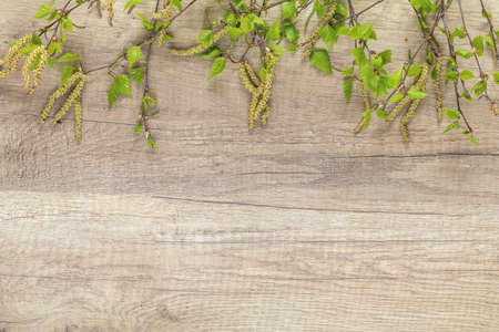 Birch tree blossom branch on the wooden background with copy space, toned photo Stock Photo