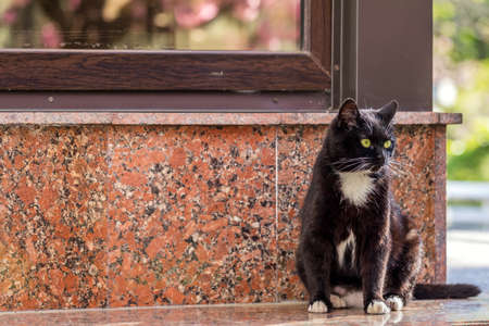 Beautiful Black and White cat looking at the camera on the Street in the foreground lies. Stock Photo