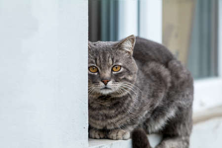 Cute gray cat sitting on the windowsill of the house outdoor. Beautiful day, close up, copy space. Toned photo, close up, shallow depth of the field. Stock Photo - 101126926