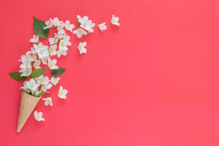 Waffle cone with jasmine flower bouquet on pink background. Flat lay, top view floral background. Stock Photo