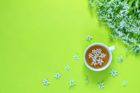 Cup of tea with white flowers on bright green surface, top view. Many blossom flower heads ornithogalum near. Stock Photo