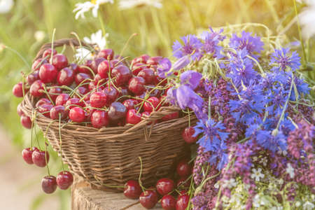 Fresh red cherries in wicker basket. Thyme, cornflower, blue bells and white flowers blossom bouquets. Toned and processing photo with soft focus. Beautiful spring background. Sunlight, sunset.