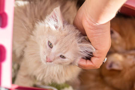 Happy little red kitten likes being stroked by woman's hand Stock Photo - 102826660