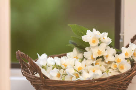 Cozy spring summer home concept. Jasmine flowers blooming in wicker basket on windowsill. Toned and processing photo with soft focus. Stock Photo