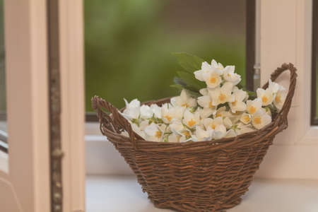 Cozy spring summer home concept. Jasmine flowers blooming in wicker basket on windowsill. Toned and processing photo with soft focus. Stock Photo - 102826726