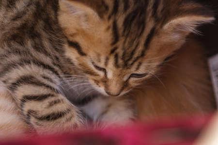 Cute kitten sleeping in a basket Stock Photo - 102826729