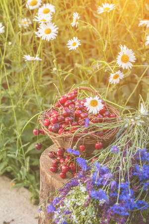 Fresh red cherries in wicker basket. Thyme, cornflower, blue bells and white flowers blossom bouquets. Toned and processing photo with soft focus. Beautiful summer background. Sunlight, sunset.