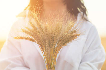 Ripe ears wheat in woman hands against her silhouette background on wheat field at the time of the sunset. Shallow depth of the field, toned and processing photo.