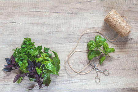 Parsley and basil bunch of bouquets, scissors and rope cord on light wooden surface. Top view, copy space.