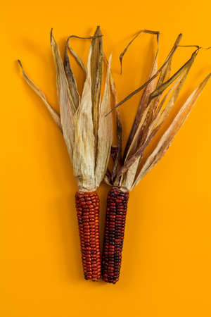 Cheerful and Colorful dried Indian Corn on yellow surface as decoration for Thanksgiving Table, Halloween, and the Fall Season. Beautiful food art background, top view.
