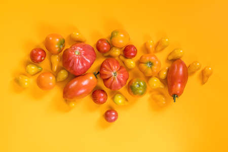 Many different red orange yellow tomatoes on yellow surface.  Beautiful food art background, top view.