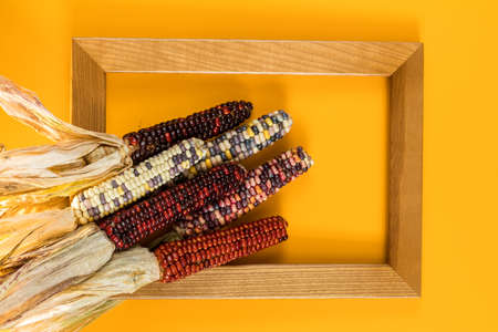 Cheerful and Colorful dried Indian Corn on yellow surface with wooden frame as decoration for Thanksgiving Table, Halloween, and the Fall Season, top view Stock Photo