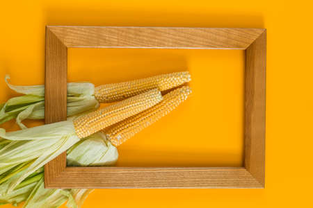 Sweet Corn on yellow surface with wooden frame as decoration for Thanksgiving Table, Halloween, and the Fall Season, top view