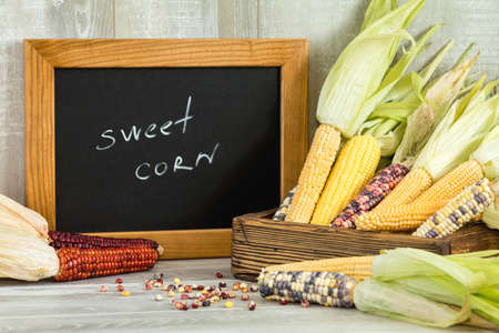 Cheerful and Colorful dried Indian Corn with black desk as decoration for Thanksgiving Table, Halloween, and the Fall Season. Beautiful food art background