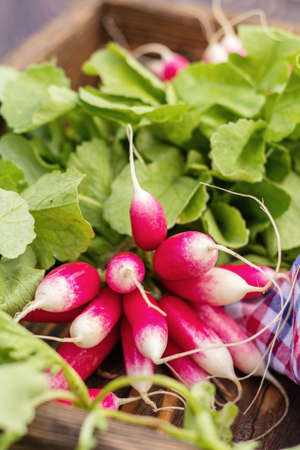Bunch of fresh radishes in a wooden box outdoors with checkered napkin on the table Stock Photo