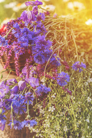 Beautiful summer background with flowers. Thyme, cornflower, blue bells and white flowers blossom bouquets. Toned and processing photo with soft focus. Beautiful summer background. Sunlight, sunset.