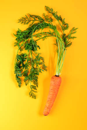 Pile of homegrown organic young carrot with water drops on yellow surface. Fresh harvested carrot on yellow background, top view Stock Photo - 109102377